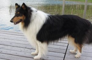 Best Bark Collar for Long Haired Dogs