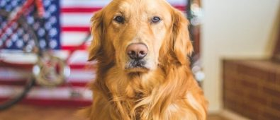 Best Shock Collar for Long Haired Dogs