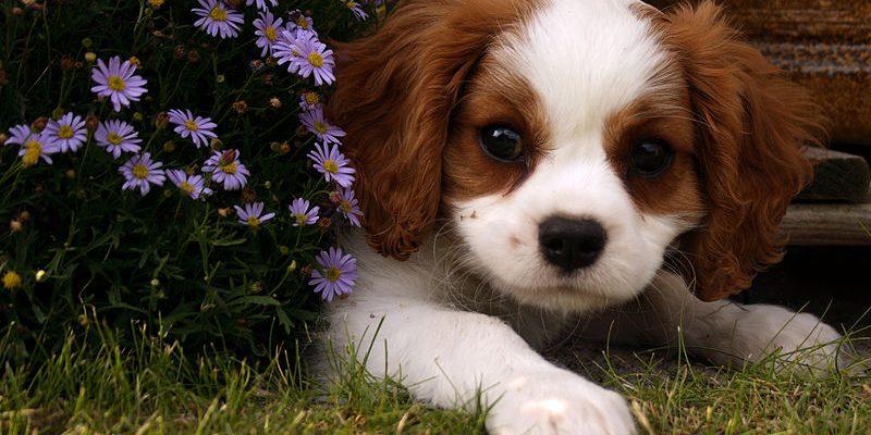 Best Dog Collar For Sensitive Skin
