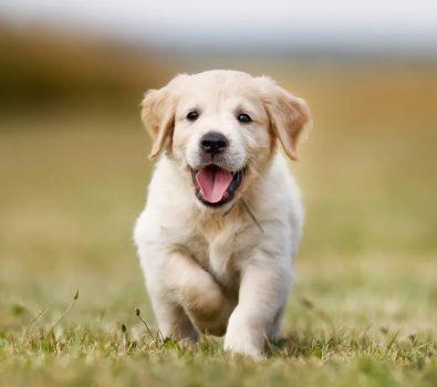 Best Dog Collar To Prevent Matting