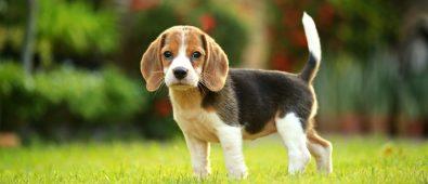 Best bark collars for beagles