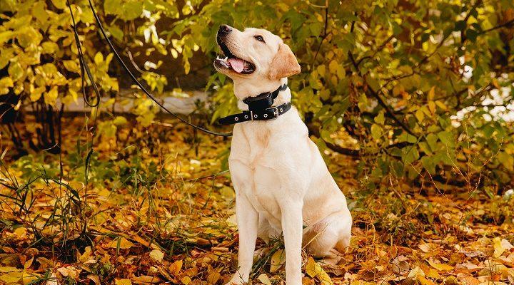 How To Choose Dog Anti-Bark Collars