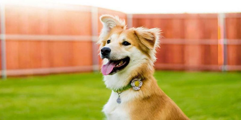 Rehabilitation Diets for Dogs