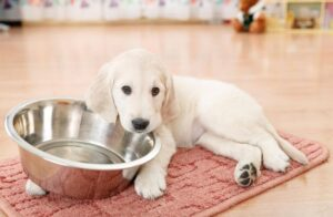 How Long Does Wet Dog Food