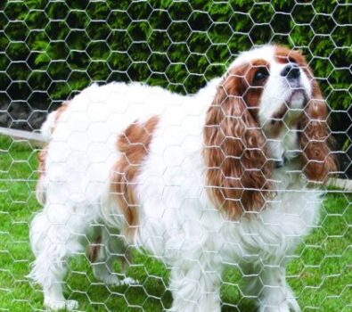 How to Build and Install a Chicken Wire Dog Fence