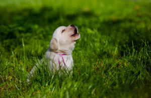 how to stop a dog from howling when left alone