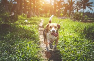 How to Train a Dog with a Shock Collar to Come